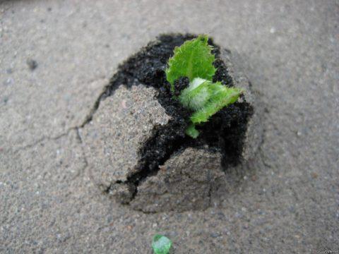 Разрушение бетона растениями