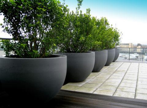 Круглые бетонные вазы