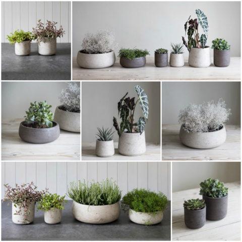 На облик бетонной вазы влияет также вид растения, который в ней высажен
