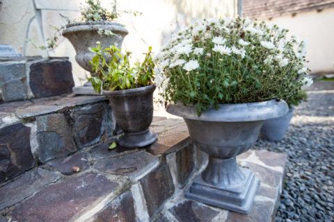 Переносными бетонными вазами можно украсить вход в дом в летний период