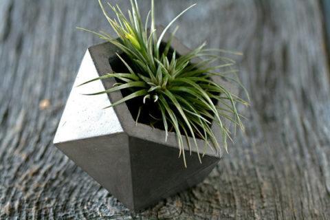 Сочетание грубой фактуры бетона и нежного молодого растения