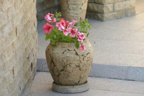 Бетонные вазы набирают всё большую популярность в качестве украшений придомовой территории
