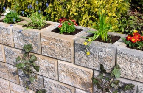 На даче, используя бетонные вазоны, можно построить красивую зеленую изгородь
