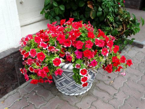 Небольшое бетонное кашпо может служить украшение входной группы в теплое время года