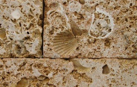 Ракушка, отпечатавшая в камне много тысяч лет назад
