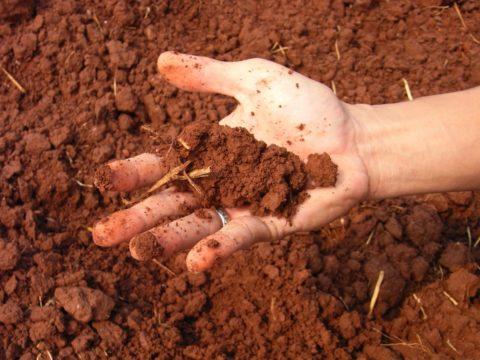 Разновидность глинистого грунта