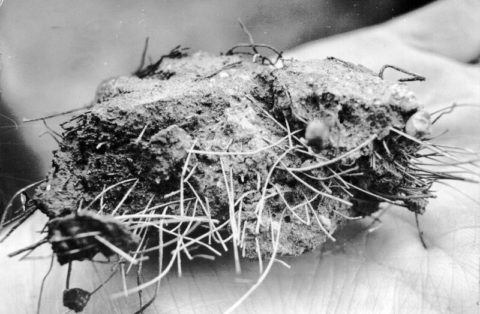 Раствор сталефибробетона в застывшем состоянии