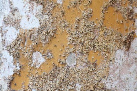 Даже самому прочному материалу требуется защита от микроорганизмов