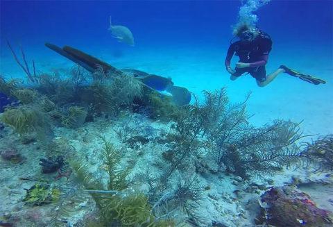Подводный мир в курортных местах страдает от нашествия туристов